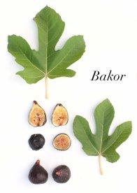 a2806a10-bakor-1-copie
