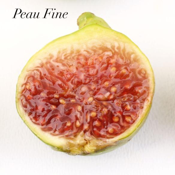 Peau Fine 2.2